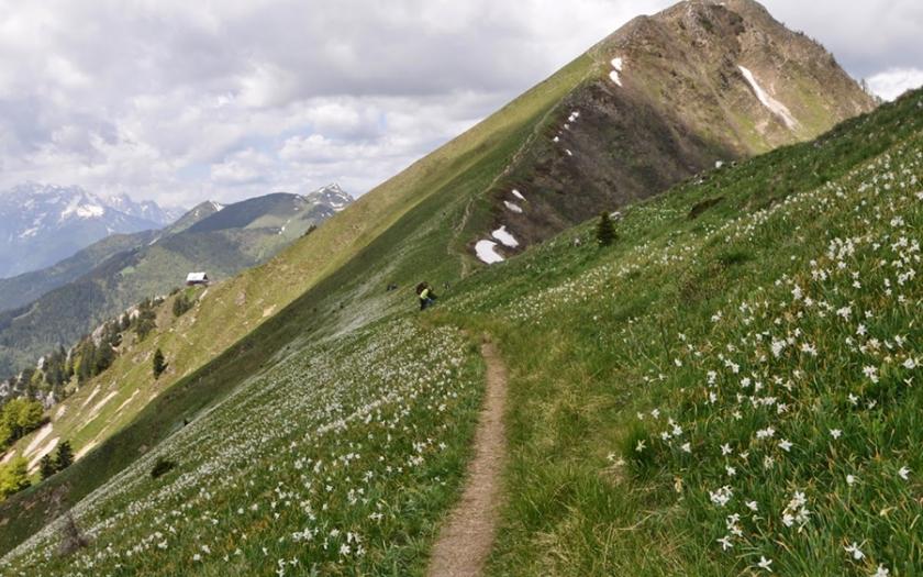 Golica (1836 m) je vrh v Zahodnih Karavankah nad Jesenicami