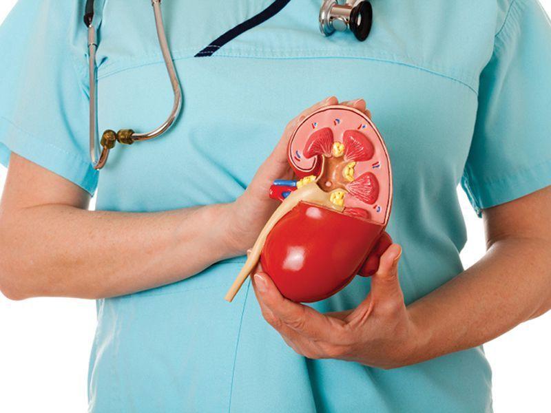prikaz ledvic