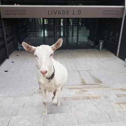 """Univerzitetni kampus Livade Izola - """"obiskovalka"""". ki smo jo posneli ob """"obisku"""" nedelujočega kampusa"""