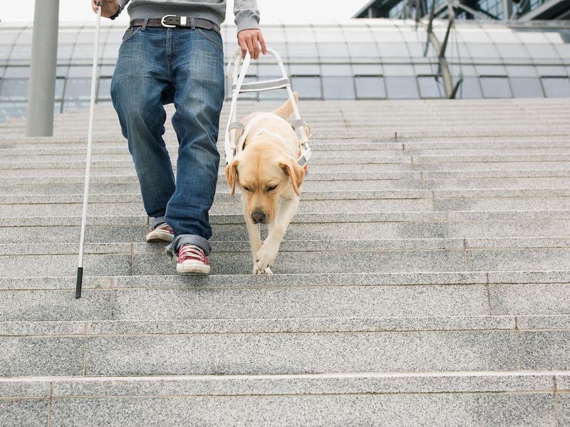slepe človek s belo palico in psom vidnikom